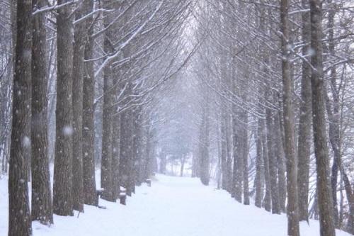 Và hàng cây khi Mùa Đông tới