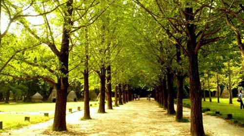 Hàng cây quen thuộc trong Bản tình ca Mùa Đông
