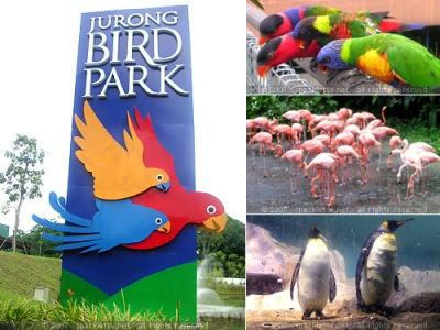 Vườn chim Jurong với hàng trăm loài chim khác nhau