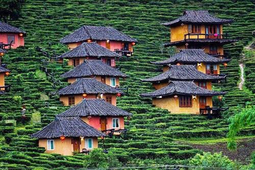 Ban Rak Thai- ngôi làng trên đồi chè